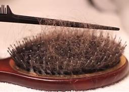Brosse sale salon de coiffure